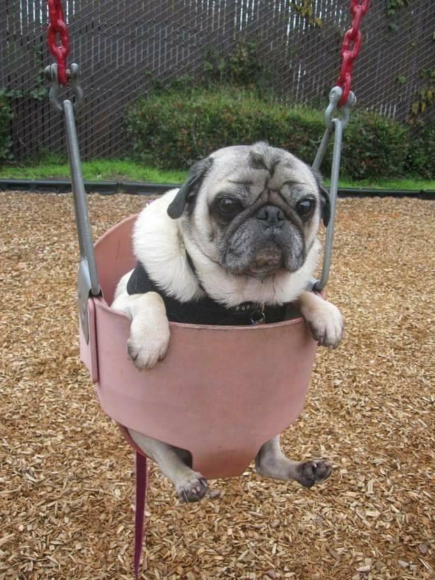 grumpy_dog.jpg