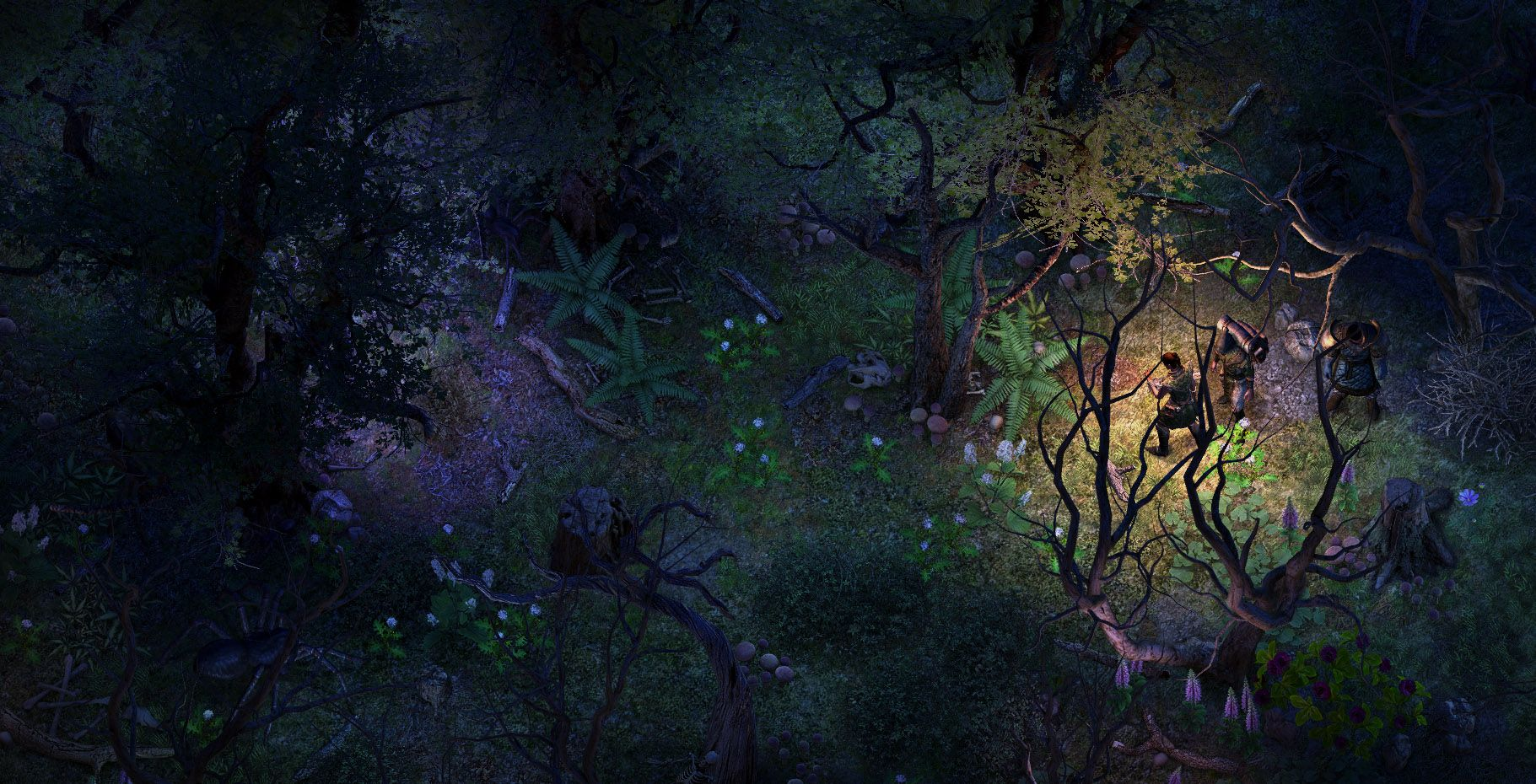 rb ancient forest 02